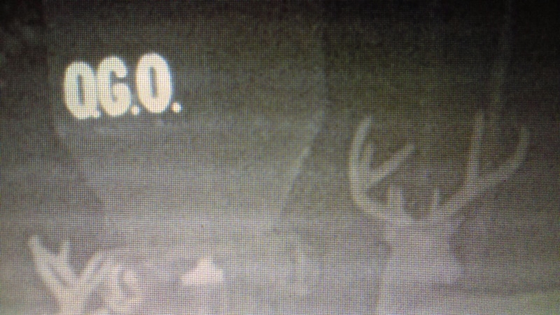 Hunting Guide Mansfield OH deer trail camera 8