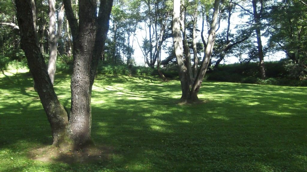 Hunting Guide Mansfield OH open wooded space