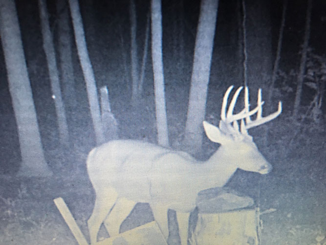 Trail Cam Mansfield OH