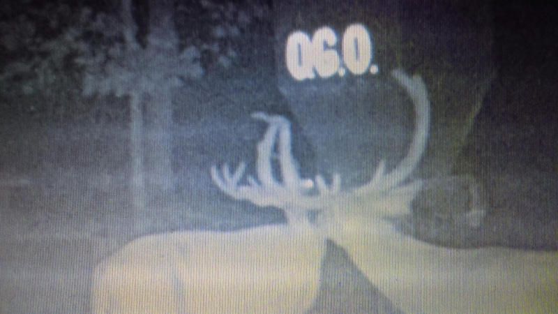 Hunting Guide Mansfield OH deer trail camera 9