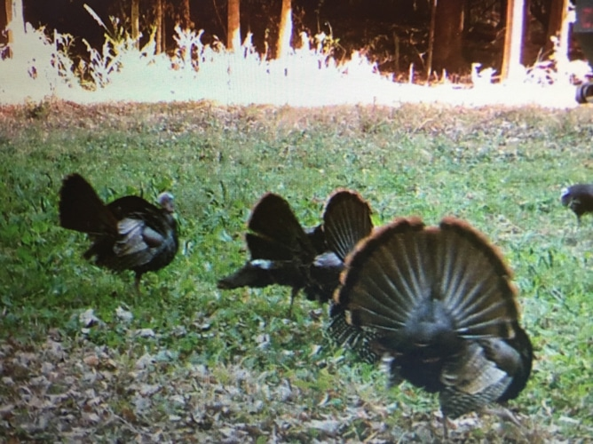 Hunting Mansfield OH Turkey Hunting