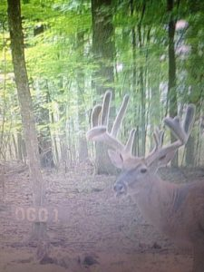 Ohio Guide Outfitters Whitetail Hunting